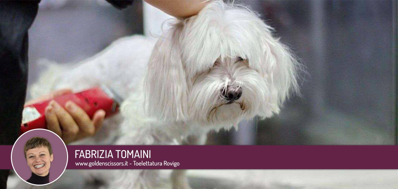 Tosare il cane in estate